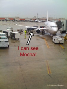 Mocha on the runway @ CAE, on the way to Costa Rica