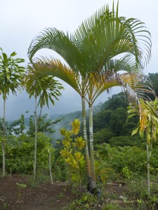 Tropical Cloud Forest, Bijagual de Turrubares, Costa Rica