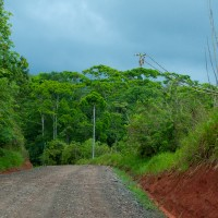 Rich red earth, vibrant green plants, dark blue skies