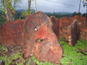 raw mango wood, Bijagual de Turrubares, Costa Rica