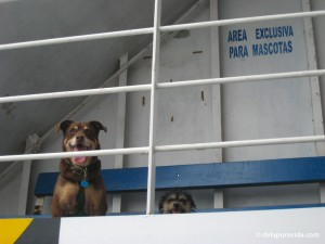 "Mocha y Pelulu in the designated area for ""mascots"""