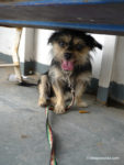 Dog hiding under a bench on the Puntarenas Ferry