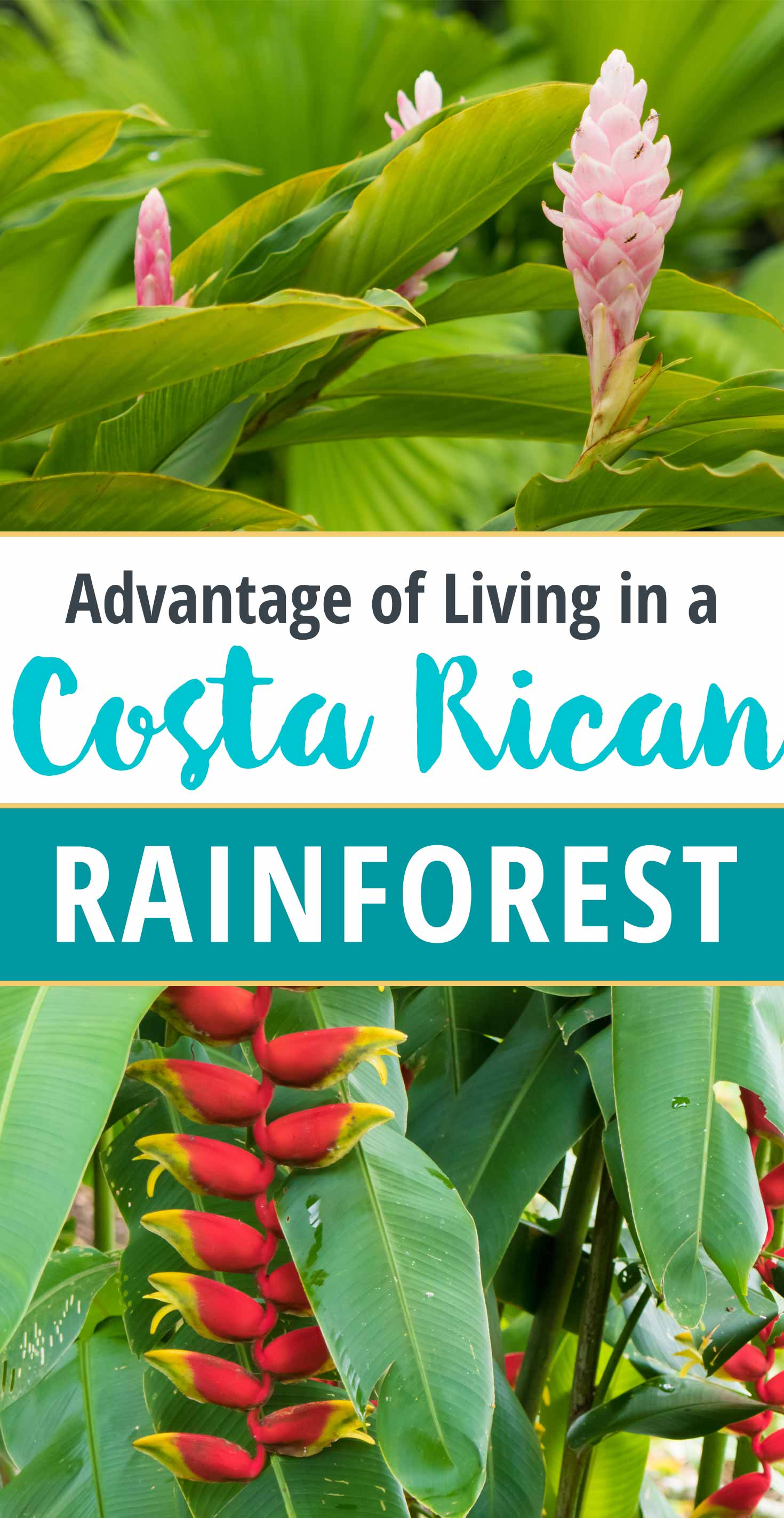 Advantage of Living in a Costa Rican Rainforest: Effortless Gardens!