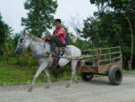 Tico riding a horse and pulling a cart.