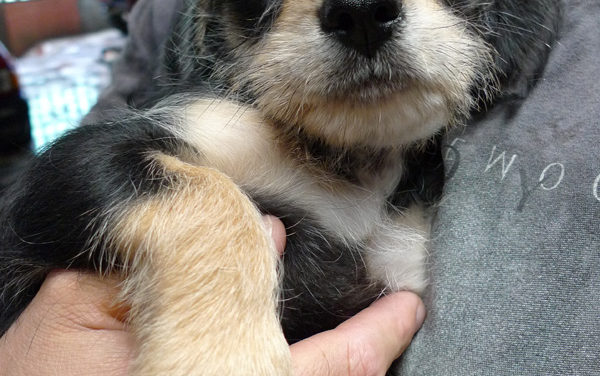 Pelulu Had Puppies!