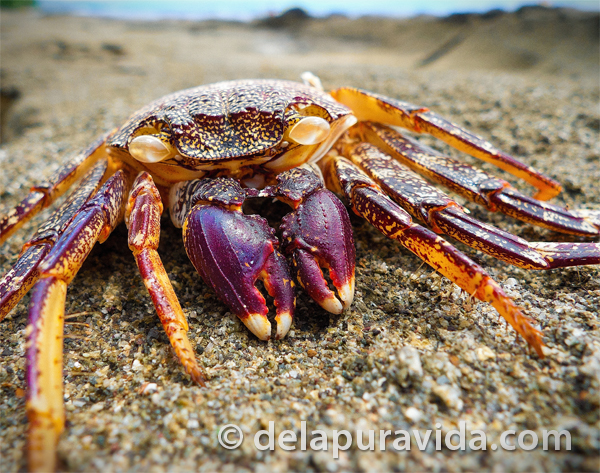 colorful crab on the beach
