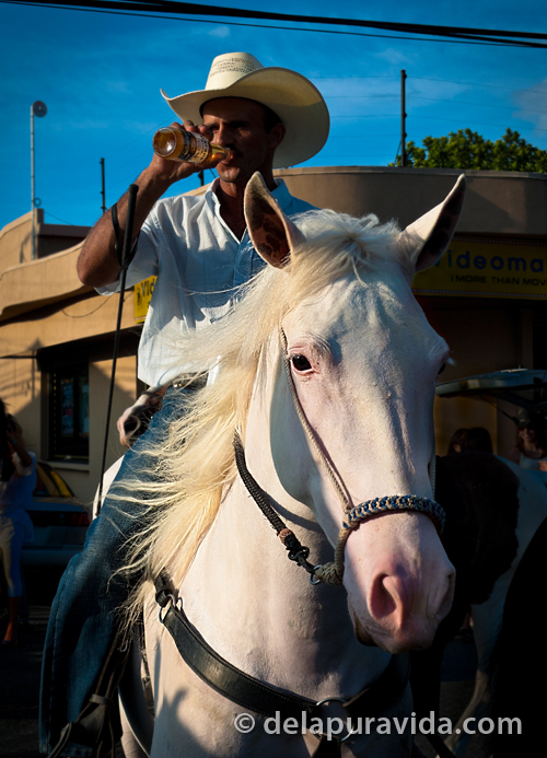 cowboy drinking beer on a horse in the parade
