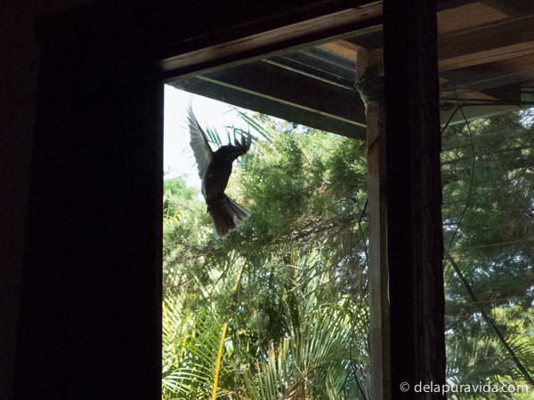 bird throwing itself at the window and pecking the glass