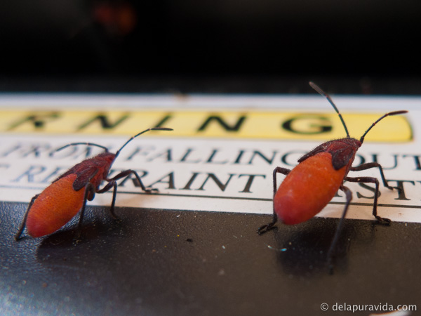 red bugs only move together