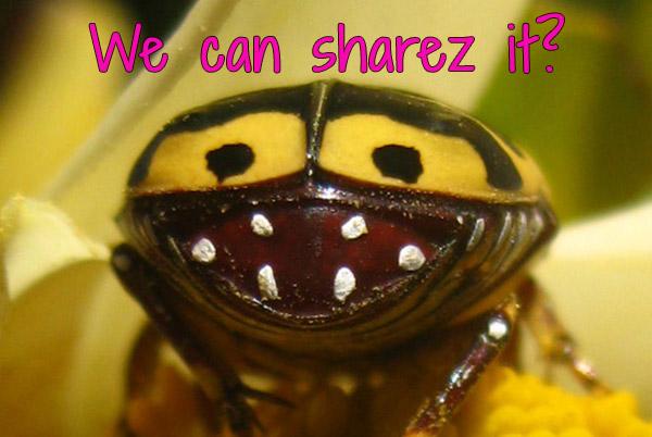 crazy looking bug eating my food