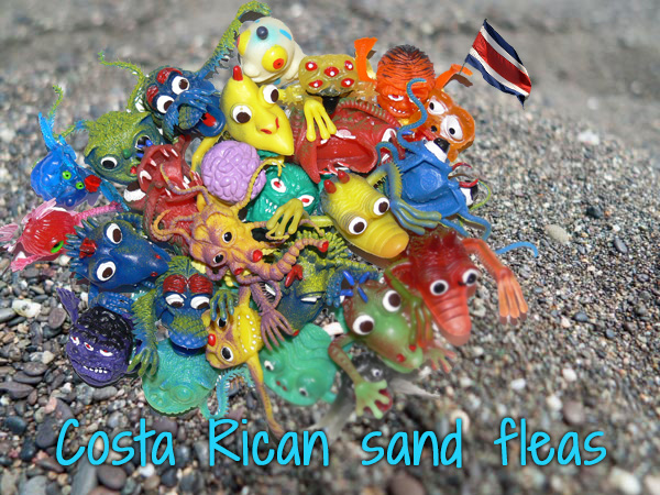 costa rican sand flea monsters