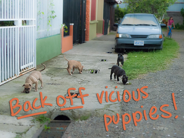 street puppies in costa rica