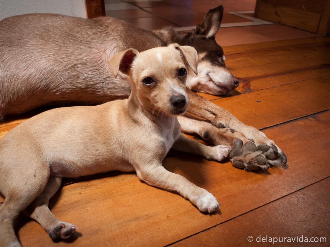 puppy holding big dog's paw