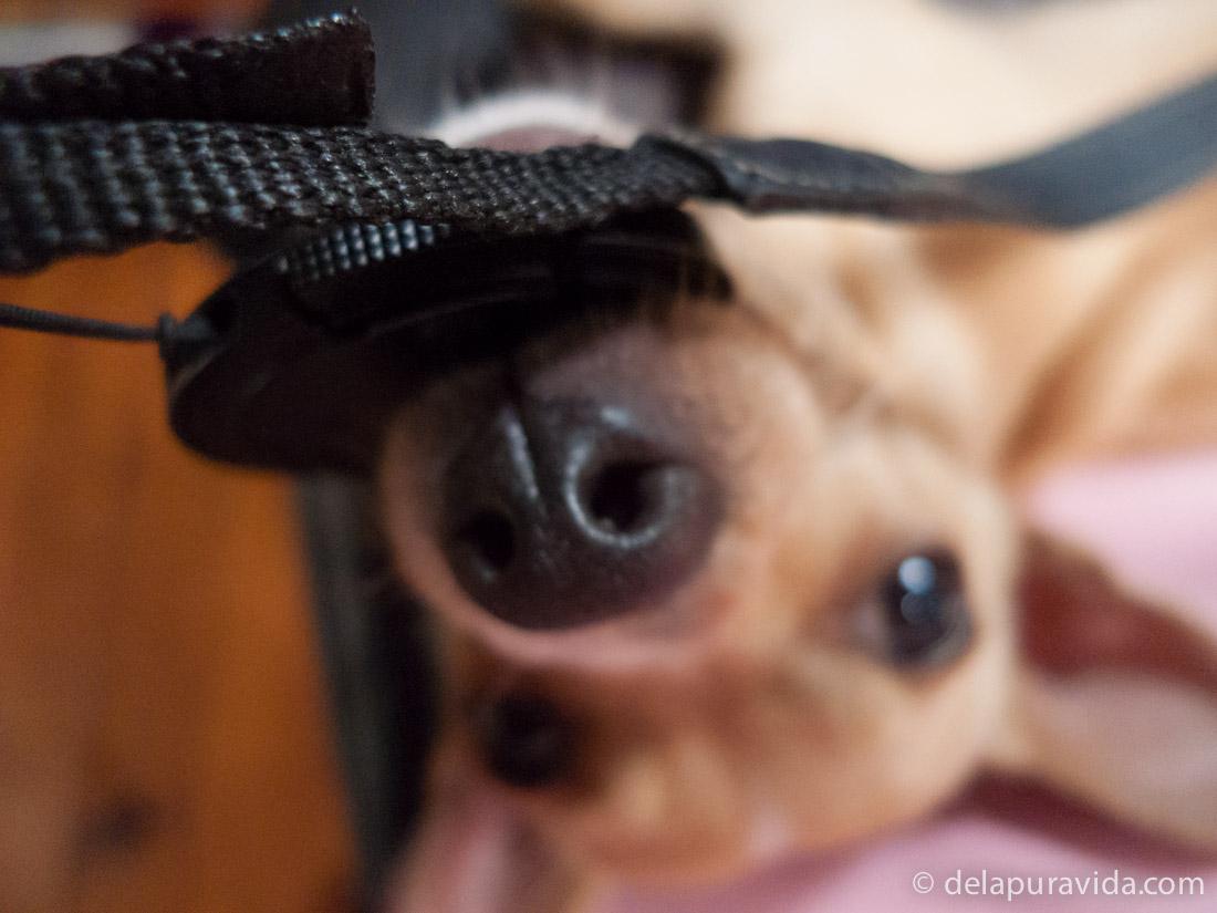 puppy biting the camera lens cap