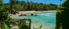 Bocas del Toro red frog island