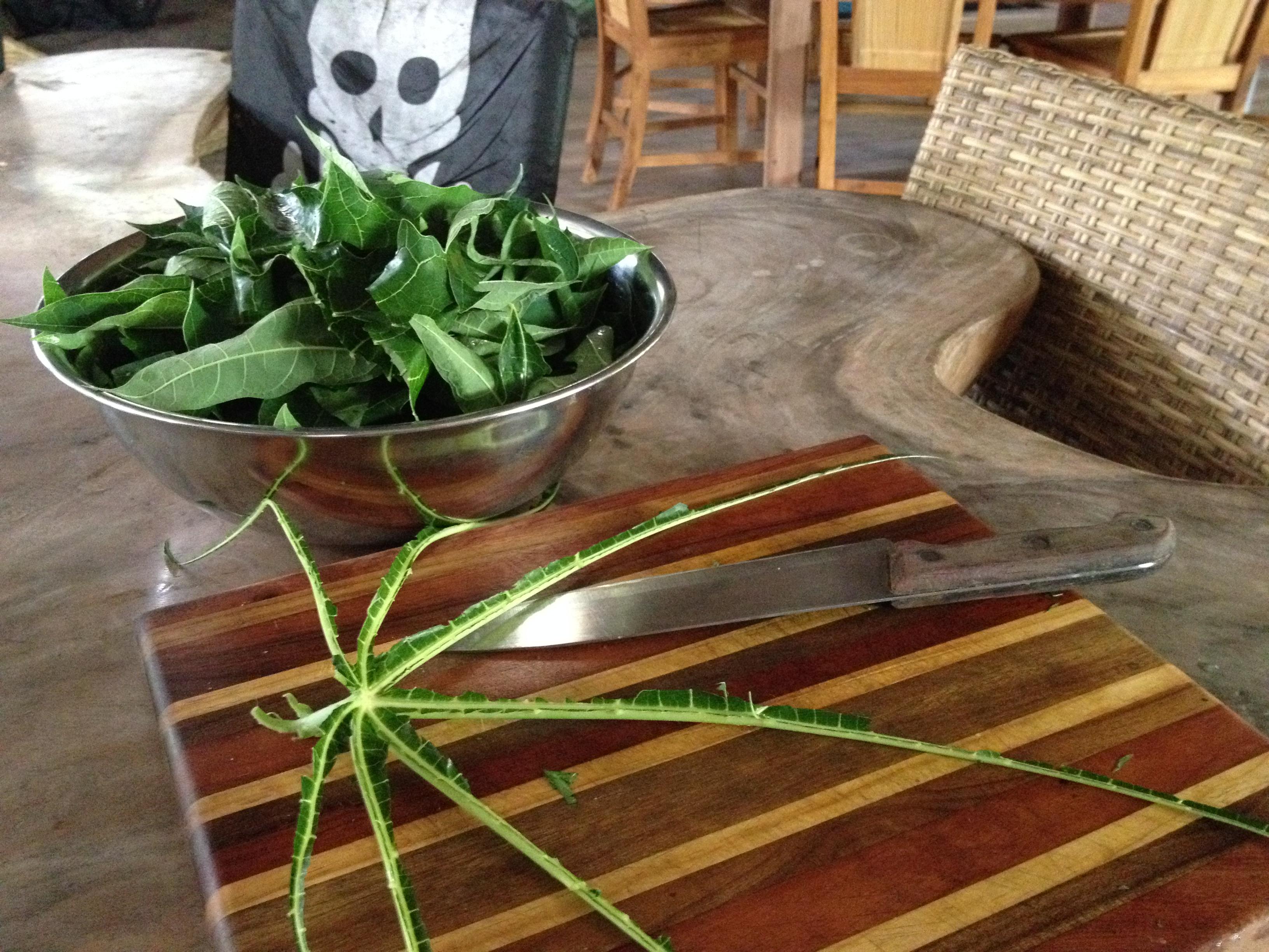 Papaya Leaf Cure for Dengue Fever and Chikungunya | De la Pura Vida