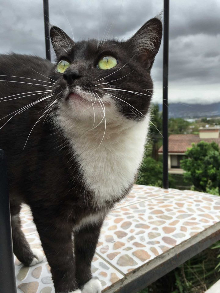 cat up on the rooftop in Escazú, Costa Rica. Ash clouds from Turrialba overhead and in the distance.