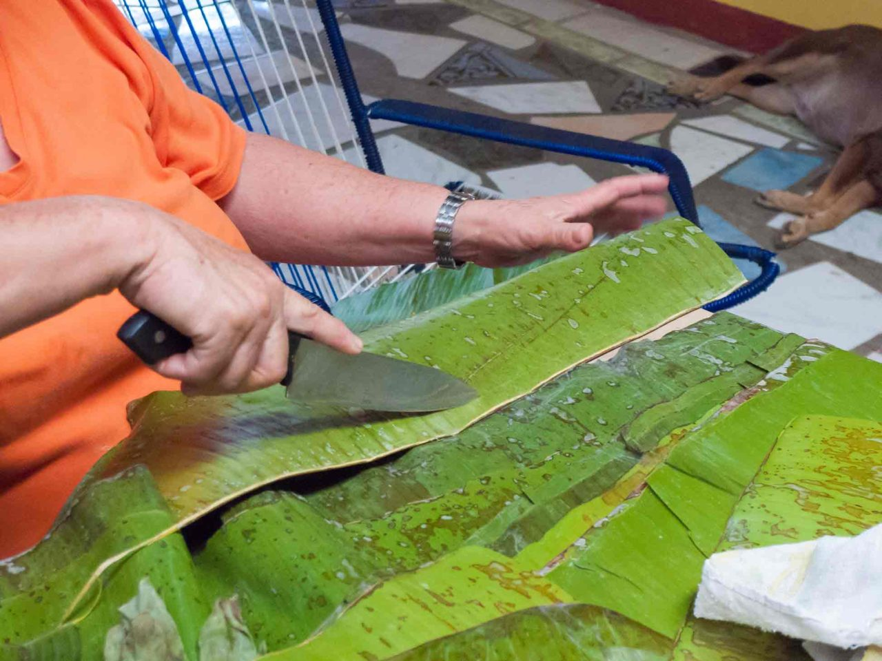 Costa Rican Tamales - cutting the stem off the plantain leaves. Recipe with photos