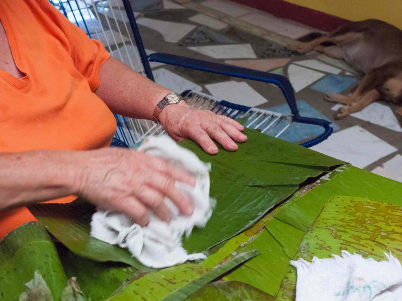 Costa Rican Tamales - cleaning the plantain leaves. Recipe with photos
