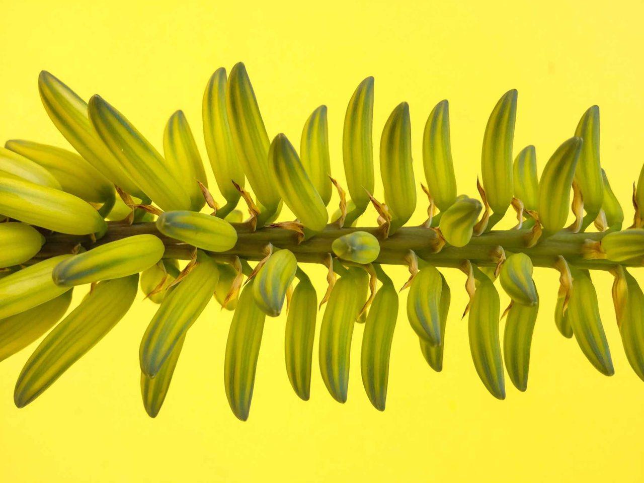 bright color plants costa rica