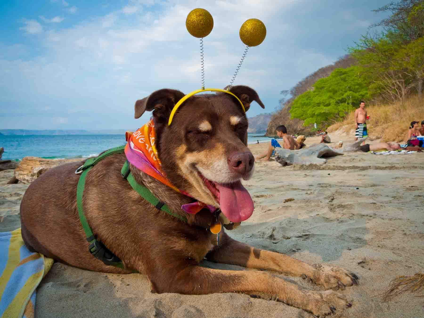 mocha on the beach with alien antennae