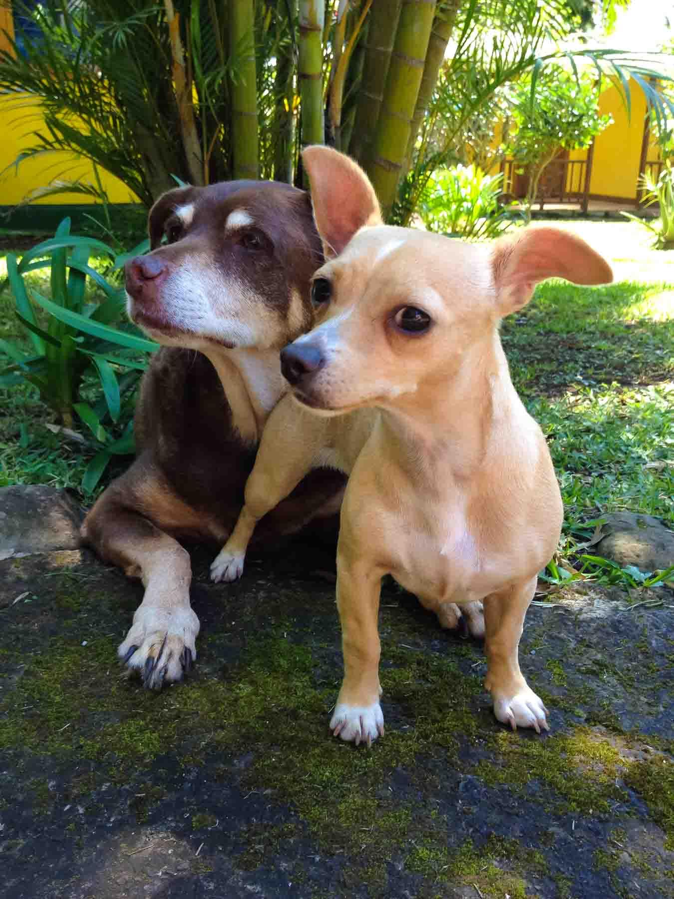 mocha and mali at la isla