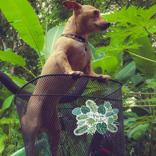 pura vida monstera watercolor sticker on a bike basket with a dog in it copyright Erin Morris