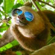 sloth chilling with sunglasses